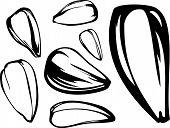 conjunto de semillas de girasol