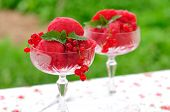 Red Currant Dessert Wine Sorbet, Copy Space For Your Text
