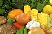 Fresh Vegetables Healthy Grown Organic in Style
