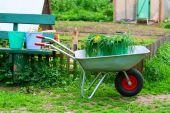 Wheelbarrow With Bucket And Grass.