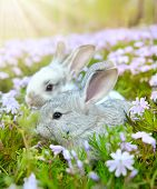 Two rabbit in garden