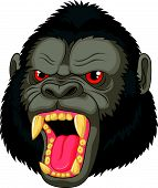 foto of gorilla  - Vector illustration of Angry gorilla head cartoon character - JPG