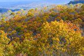 Autumn foliage in Shenandoah National Park - Virginia, United States