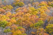 Autumn tree top foliage in Shenandoah National Park - Virginia, United States