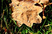 Autumn leaf with dew on the grass