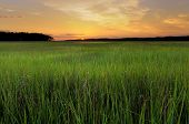 stock photo of marsh grass  - Glowing sky and marsh grass at sunrise in early summer - JPG