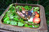Organic waste in rubbish bin