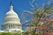 Capitol building in Spring - Washington DC, United States of America