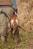 Hunter Holding Two Dead Pheasants