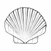 Sea Shell Isolated On A White Background. Monochromatic Line Art. Retro Design. Vector Illustration.
