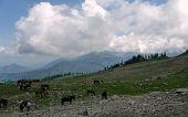 Horses grazing on mountain