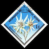 Vintage  Postage Stamp. The Flowerses Leontopodium Ochroleucum.