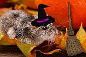 Little Hamster In Witch Hat For Halloween
