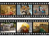 Animals in frames of film (my photos), isolated on white background