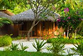 Bungalow in jungles, flowers and trees