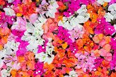 Petals of flowers - abstract nature background