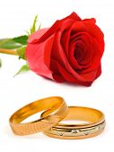 Wedding rings and rose isolated on white background