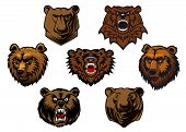 Different brown bear heads