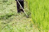 foto of grass-cutter  - Worker cutting grass in rice field with the mowers engine - JPG