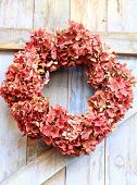 An autumn wreath of faded hydrangea flowers