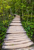 Pathway in Plitvice lakes park at Croatia - travel background