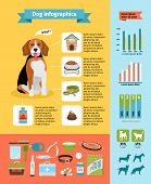 image of cute dog  - Vecto dog infographics - JPG