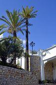 Palm trees in Armacao De Pera, Algarve