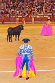 Matador and bull in corrida at Madrid Spain