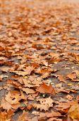 Lots Of Orange Leaves