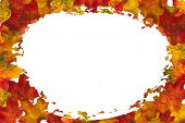 Autumn Leaf Oval Background