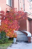A beautiful entrance of a brick apartment building with stairs and trees with red autumn foliage