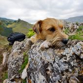 cute dog resting on rocks