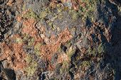 pic of lichenes  - Background of bright red stone covered with green and grey lichen - JPG