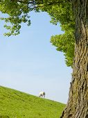 stock photo of spring lambs  - Spring image of a young lamb on a green meadow