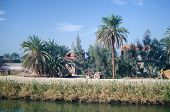 picture of oasis  - Egypt - JPG