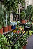 picture of flower shop  - Plants and flowers a stylish flower shop - JPG