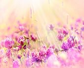 stock photo of red clover  - Flowering red clover in meadow - JPG
