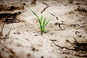 pic of greenpeace  - Green plant in dried cracked earth desert - JPG
