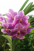 foto of orquidea  - Beautyful Orchid in the city on morning - JPG