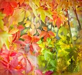 picture of foliage  - Soft focus on colorful foliage  - JPG