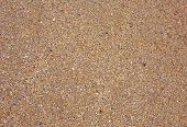 stock photo of fragmentation  - Small and fragmented seashells suitable for background - JPG