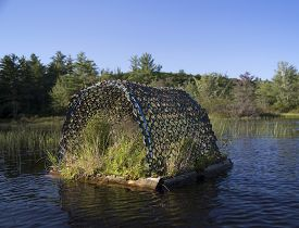 stock photo of loon  - Loon nesting raft on Squam River in Ashland - JPG
