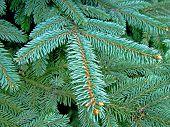 Weihnachtsbaum-Pins