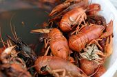 picture of creole  - Pan with boiled crayfish at the market - JPG