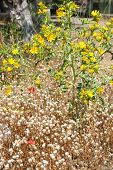 picture of dry grass  - Close up background of dry grass and flowers - JPG