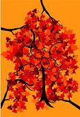 Folhas de árvore de outono com cor