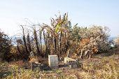 stock photo of vegetation  - damaged picnic benches and burnt tropical vegetation after desctructive fire - JPG