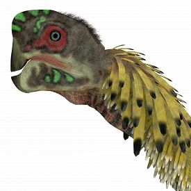 image of omnivore  - Citipati was a omnivorous theropod dinosaur that lived in Mongolia during the Cretaceous Period - JPG