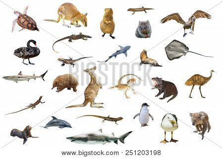 Australian Animals Isolated On White
