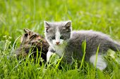 Two beautiful cats hidden in the grass